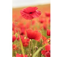 Hardy Country Photographic Print