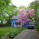 Spring comes to Somerville by nealbarnett