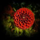 Red Pompom. by Lynne Haselden