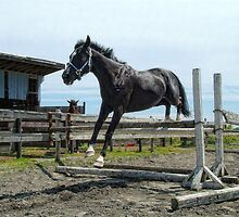 First Stallion (Lands) by James Zickmantel