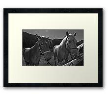 a couple of San Juan Horses  Framed Print