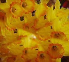 Daffodils thru a Prism by wolfmarx