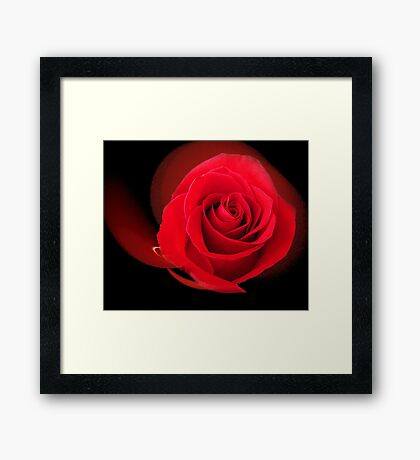 Red, Red Rose Framed Print