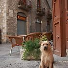Dog in French Village by Haggiswonderdog