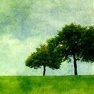 Three Trees in Summer by rosedew