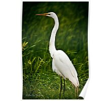 You met my other brother Earl Egret, This is my Sister Ethel Egret Poster