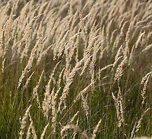 Grass in Autumn by Zosimus