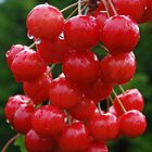 Juicy Cherries by Geraldine Miller