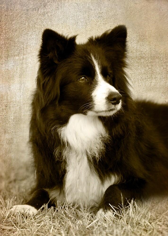 Soccer Dog 2 - border collie by Jenny Dean