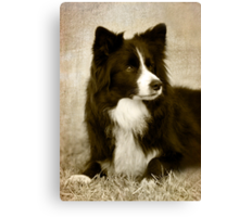 Soccer Dog 2 - border collie Canvas Print