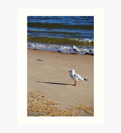 Silver Gull - Bribie Island Art Print