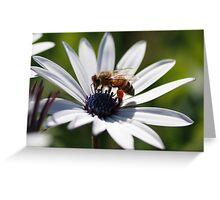 Pollen Sack Greeting Card