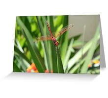 Wings That Glisten Greeting Card