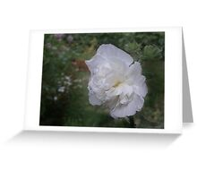 The White Queen Greeting Card