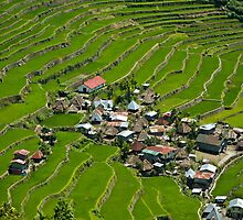 2000-year old Batad Rice Terraces, Philippines by Andrew & Mariya  Rovenko