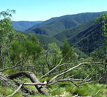 She-oak Hakea and the Kowmung Valley by orkology