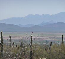 Arizona desertscape by nealbarnett
