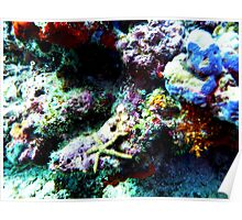 Beautiful corals with a star Poster