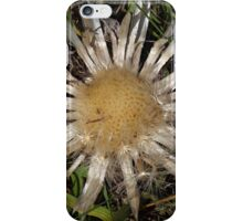 Dwarf Carline Thistle (Carlina acaulis) in the Swiss Alps. iPhone Case/Skin