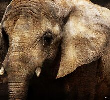 Graphic Elephant Portrait by Norman Rawn