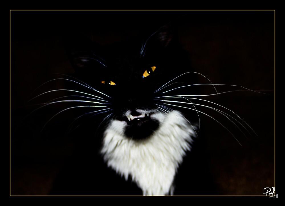 Roar by Pril