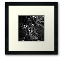 A dance of life upon the wind Framed Print