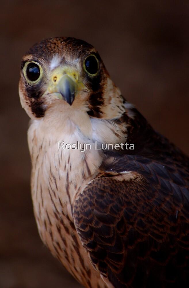 Hawk 5 by Roslyn Lunetta