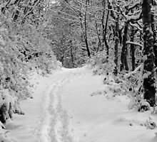Narnia by Sioned Thomas-Photography