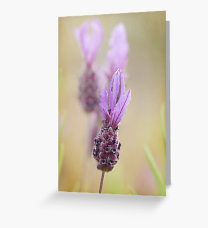 Flag Lavender Greeting Card
