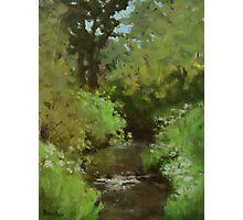 Creek at North Bank Habitat Mgmt Photographic Print