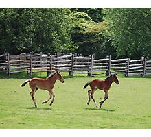 Two Standardbred Youngsters at Play Photographic Print