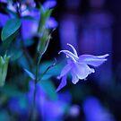 Night Garden by Jim Wilson