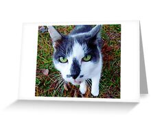 Green Eyed Pussy Cat Greeting Card