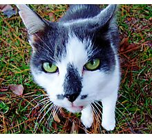 Green Eyed Pussy Cat Photographic Print
