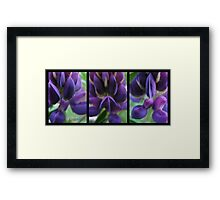 Lupin love Framed Print
