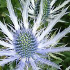 thistle by Sue Payne