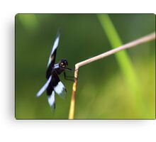 Lensbaby Dragonfly Canvas Print