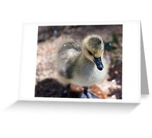 duck, duck, gosling! Greeting Card