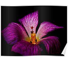 Little Star Flower Poster