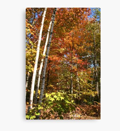 Autumn Trees and Colours Canvas Print