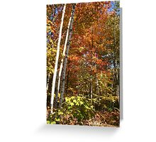 Autumn Trees and Colours Greeting Card