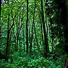terrarium green by Bruce  Dickson