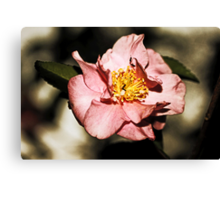 Not Just Another Pretty Camellia Canvas Print