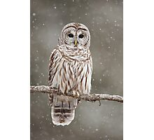 Barred Owl in heavy snowfall Photographic Print