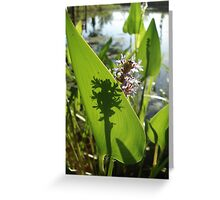 Pickerel Weed and Shadows Greeting Card