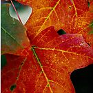 Fall leaves......My favorite time of year.. by jammingene