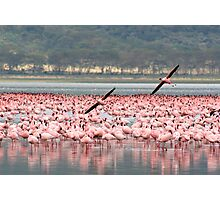 Pink flamingos, Lake Nakuru, Kenya Photographic Print