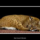 Bobcat by Rose Santuci-Sofranko