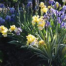 Garden of Iris by Pat Yager