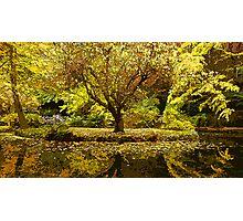 Alfred Nicholas Gardens Photographic Print